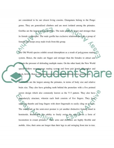 Hominoids essay example
