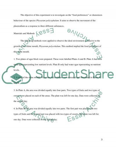 termite lab essay example