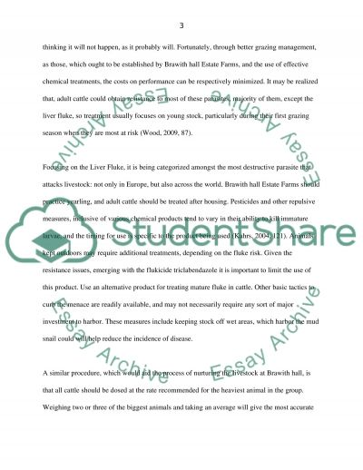Animal Production essay example