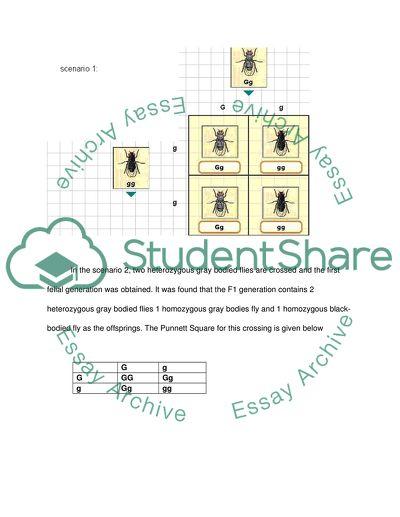 Punnet squares experiment lab