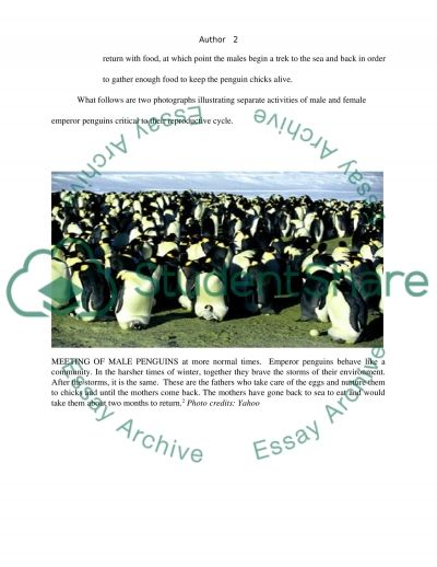March of the Penguins The movie essay example