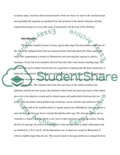 Developmental Biology essay example