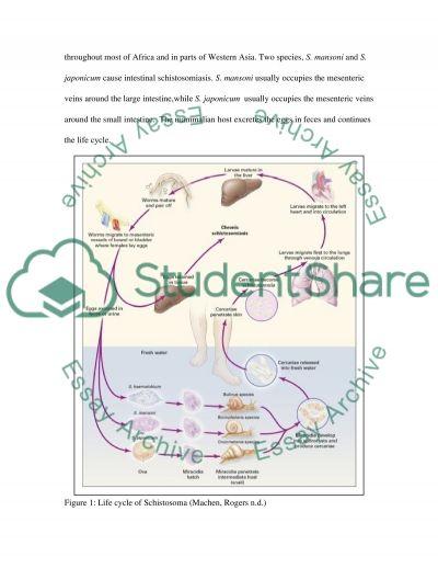 Schistosomes essay example