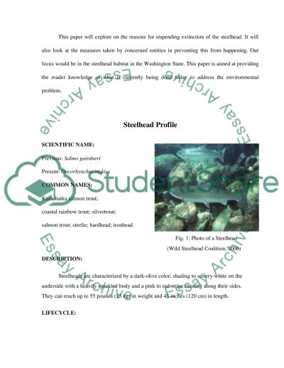 Impending Extinction of Steelhead essay example