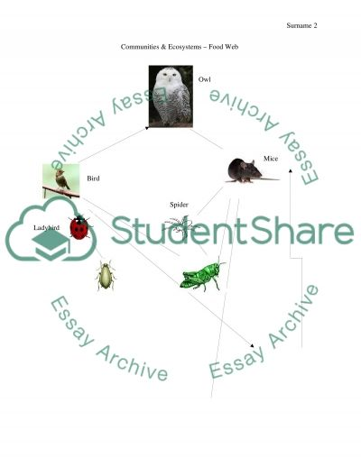 food web assignment Food web assignment science 7 on a piece of a3 paper, create a food web based on a specific ecosystem you will need to study a specific ecosystem, from the apex.