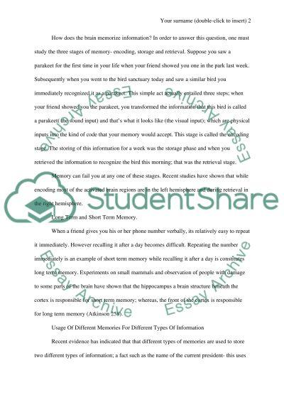 Human Memory essay example
