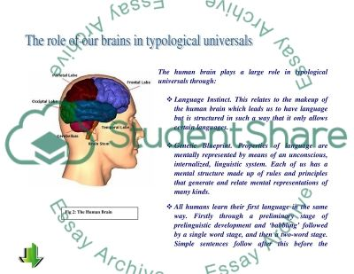 The Role of Typological Universals in SLA Essay example