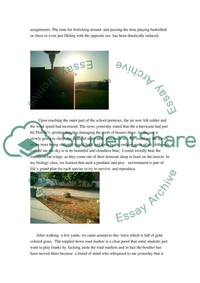 Imagery essay essay example