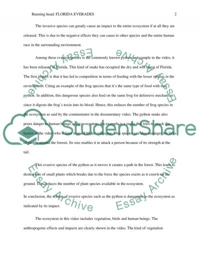 Florida evergldes essay example