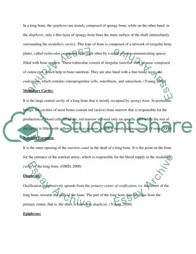 Long Bone essay example