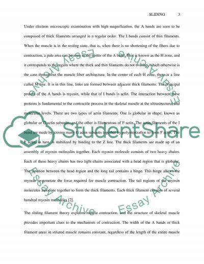 Sliding Filament Theory essay example