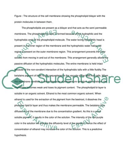 Argument Essay Thesis The Effect Of Alcohol Concentration On The Leakage Of Pigment From Beetroot  Cells Essays On Health also College English Essay Topics The Effect Of Alcohol Concentration On The Leakage Of Pigment From Essay Personal Essay Examples For High School