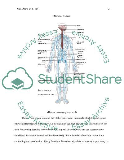 Nervous System description