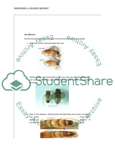 Mutations of Drosophila