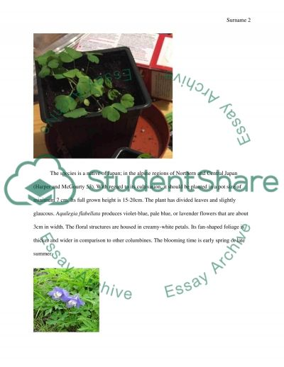Research and grow Aquilegia flabellata from a plug essay example