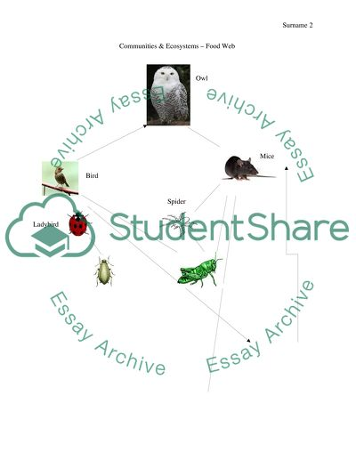 Communities & Ecosystems Food Web Poster Assignment
