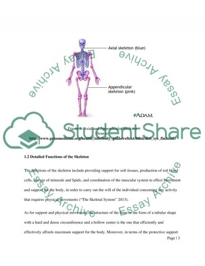 The Skeletal System. Assignment example