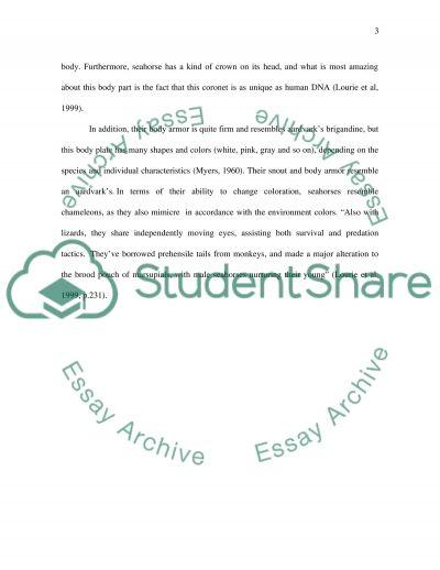 Seahorse essay example