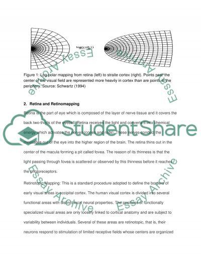 Final Exam Essay Sensation and Perception