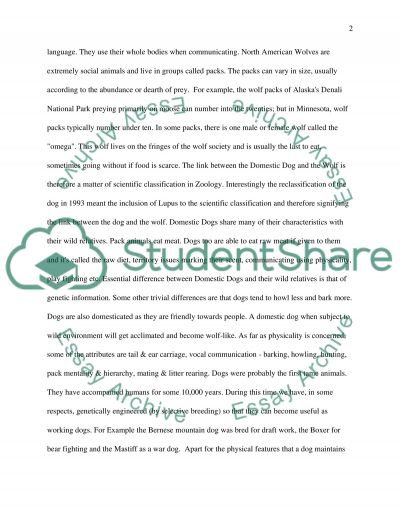 Domestic Dogs essay example