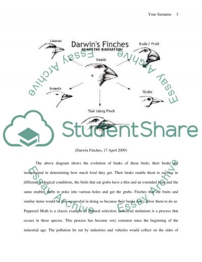 Natural Selection essay example